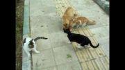 گربه های خیابانی را دریابید