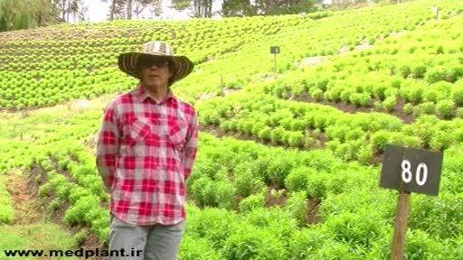 تولید ارگانیک گیاهان دارویی و معطر در اسپانیا