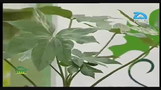 ۳) پرورش گیاهان خانگی