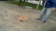 گربه ولگرد باهوش