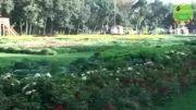 نمایشگاه گل و گیاه کرج | فرش گل