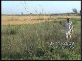 شکار بلدرچین با قرقی در پاکستان
