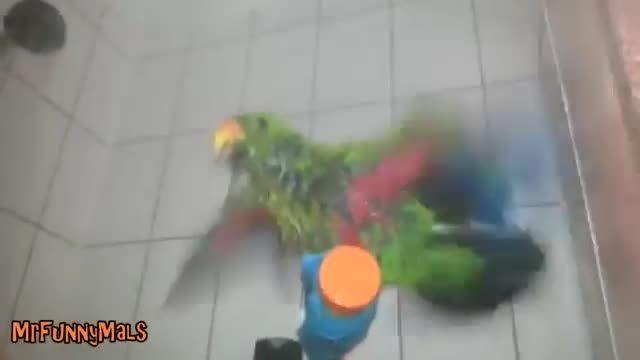 فیلم زیبایی از حمام کردن انواع طوطی ها