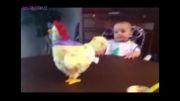 بچه و مرغ تخم گذار
