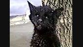 گربه به دار آویخته