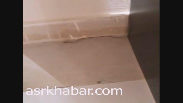 فیلم: کشف مار در اتاق کامبیز دیرباز