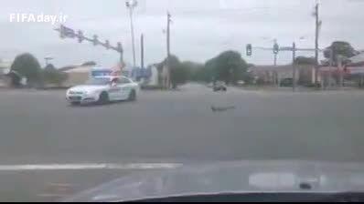 وقتی برای اردک پلیس دارن دیگه برا ما چی؟!؟!؟