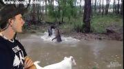 تلاش سگ برای نجات کانگورو