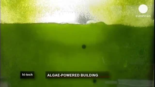 تامین انرژی ساختمان با جلبک