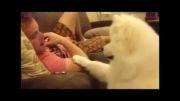 وقتی سگ بغل میخواهد