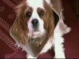 کارهای جالب و عجیب سگها