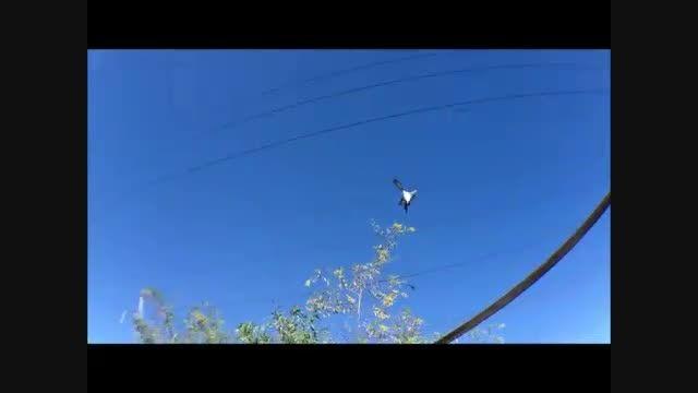 کبوتران ایرانی در خارج از کشور