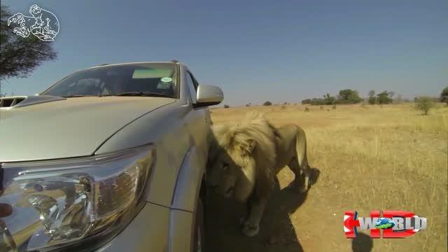 حمله حیوانات وحشی به انسان..! HD