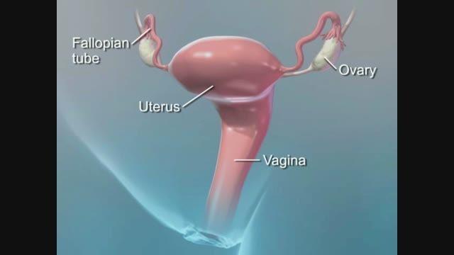 سیستم باروری زن