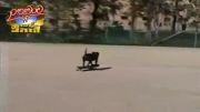 سگ اسکیت سوار؟