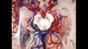 تصاویر سه بعدی از مغز انسان