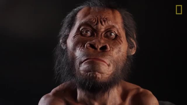 کشف گونه ای از انسان که بسیار شبیه میمون بود