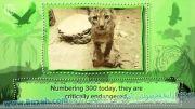 ده حیوانی که ممکن است در ده سال آینده منقرض شوند