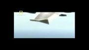 سقوط هواپیما-سکان عمودی شکست!!!
