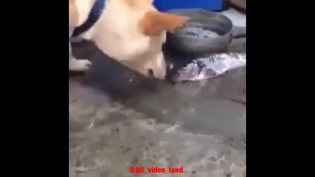 تلاش سگ برای زنده نگه داشتن ماهی