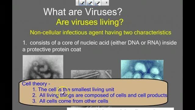 آشنایی با همانند سازی ویروس ها