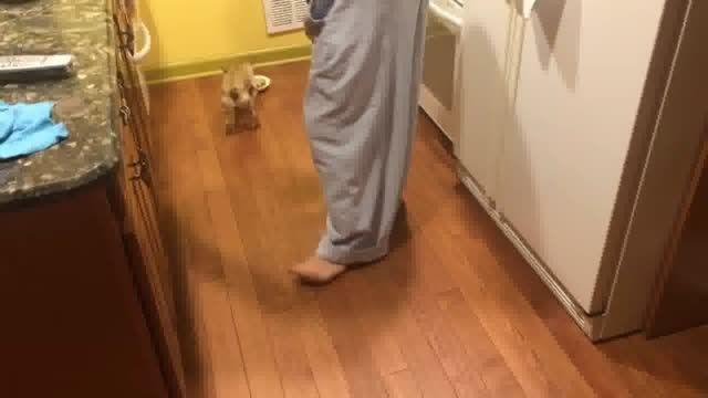 سگی که نمیخواست تنها غذا بخورد