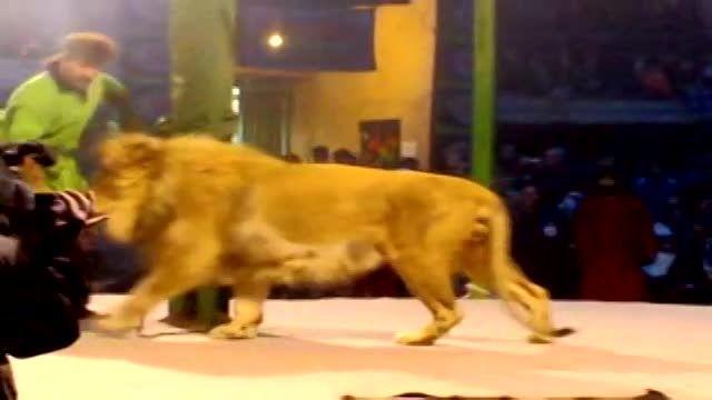 شیر واقعی در مجلس تعزیه امام حسین (ع)