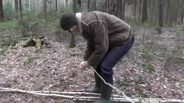 ساخت سر پناه در جنگل توسط تنه درختان جوان