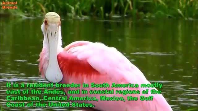 10 پرنده برتر زیبایی و رنگی شناخته شده