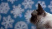 تریلر فیلم کمدی Grumpy Cat's Worst Christmas Ever 2014