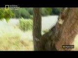 مستند شکار اژدها-National Geographic Comdo