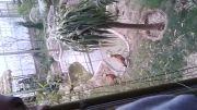 باغ پرندگان تهران در نوروز 93