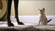 رفتار عجیب گربه و سگ!!!