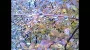 صحنه های زیبا از پاییز ارزنه باخرز(عکاسی چهره ماندگاراسدی)