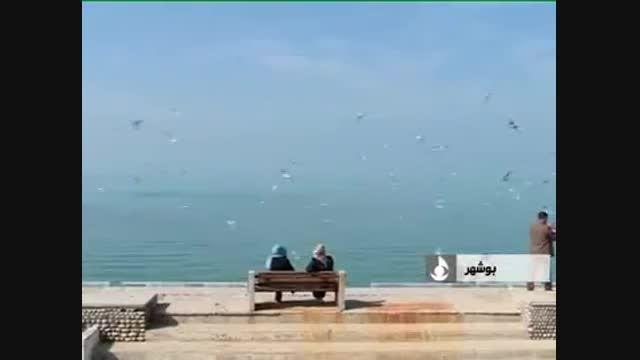 ویدیوی زیبا از مهاجرت پرندگان در سواحل بوشهر