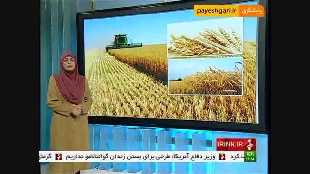 ذخیره سازی 5 میلیون تن گندم مازاد بر مصرف