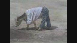 خر لباس می پوشد