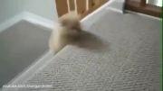 بالا و پایین رفتن توله سگها !
