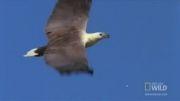 نبرد دیدنی عقاب ها در آسمان