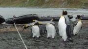 مشکل اساسی پنگوئن ها