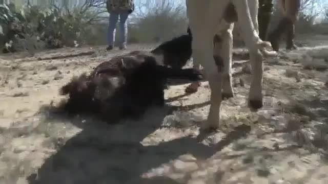 شکارچیان بسیار بی رحم!!...+15