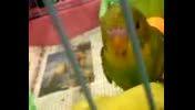 غذا خوردن مرغ عشق روی دست