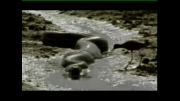 مار عظیم الجثه