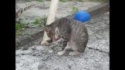 تاب بازی گربه من(گابریل)