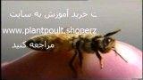 پرورش زنبور عسل و کنترل بیماریها