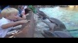 حمله دلفین گرسنه به یک کودک