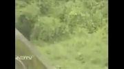 حمله پلنگ به گارد جنگل !!!