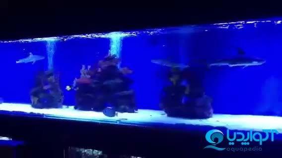 آکواریوم آب شور کوسه ماهی
