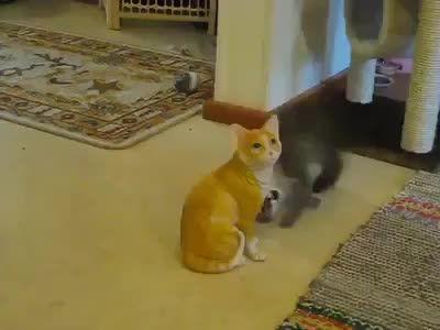 رفتار یه گربه وقتی مجسمه خودشو میبینه