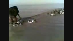 کشتار پرندگان مهاجر